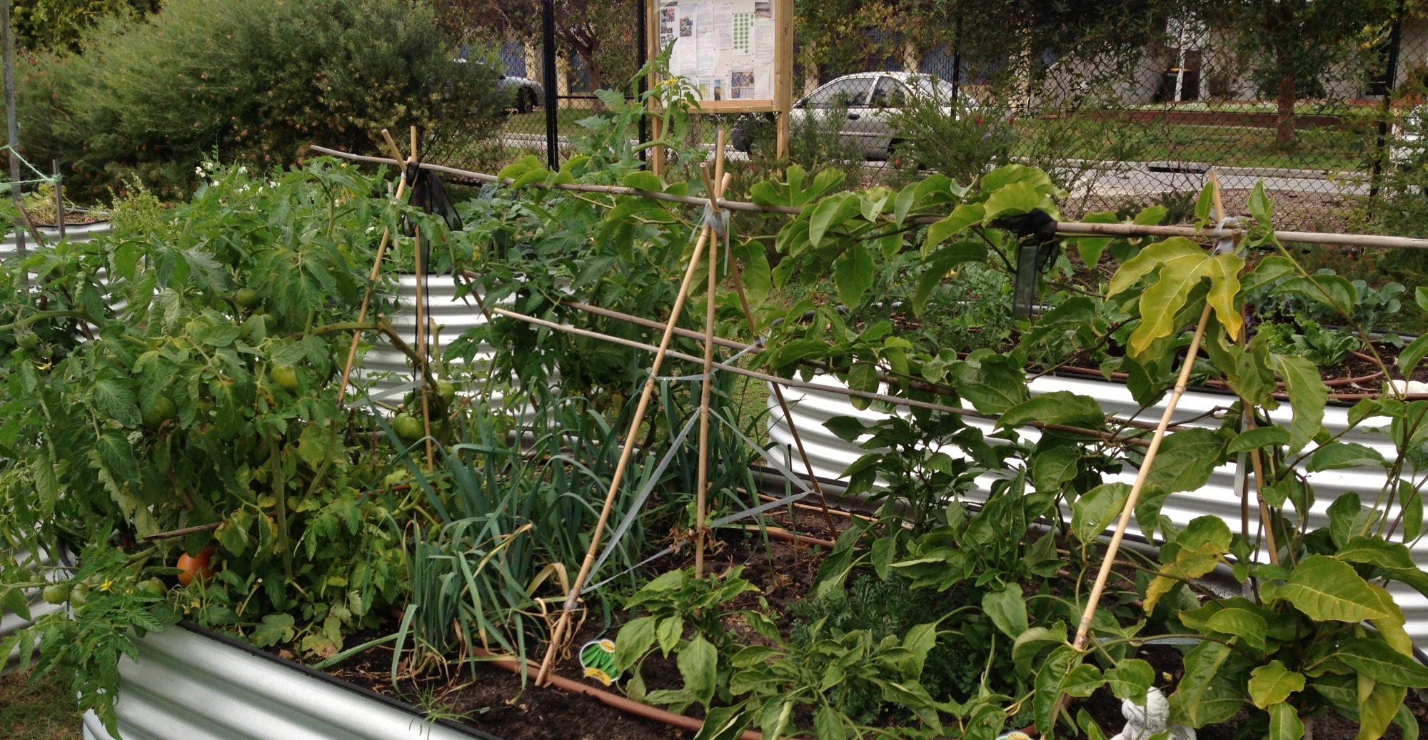 St Lukes Community Garden
